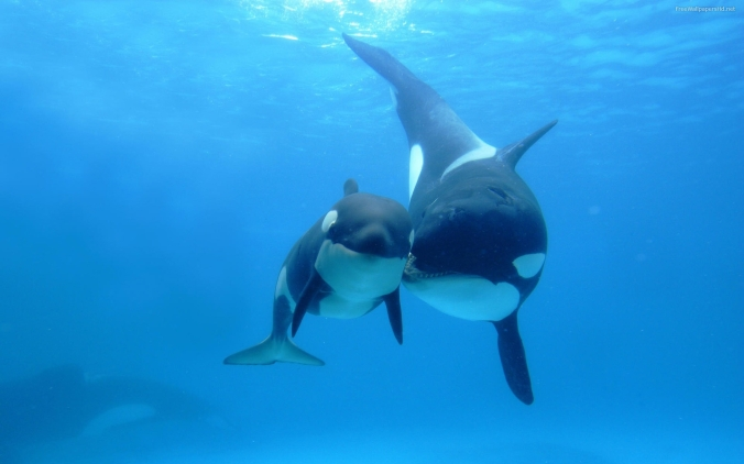 Whales_wallpapers_288